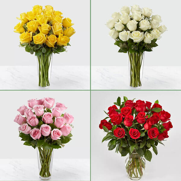 اشتراک گل رز هلندی