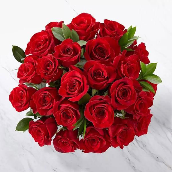 اشتراک گل رز هلندی قرمز